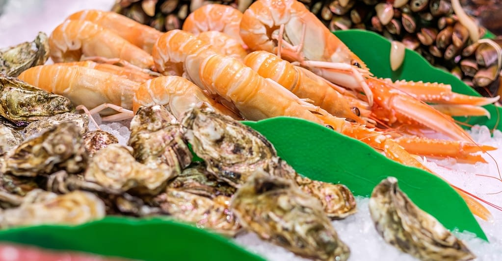 oysters-shrimps-clams-prawns